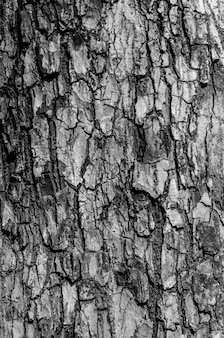 Texture d'écorce noire et blanche et motif d'écorce
