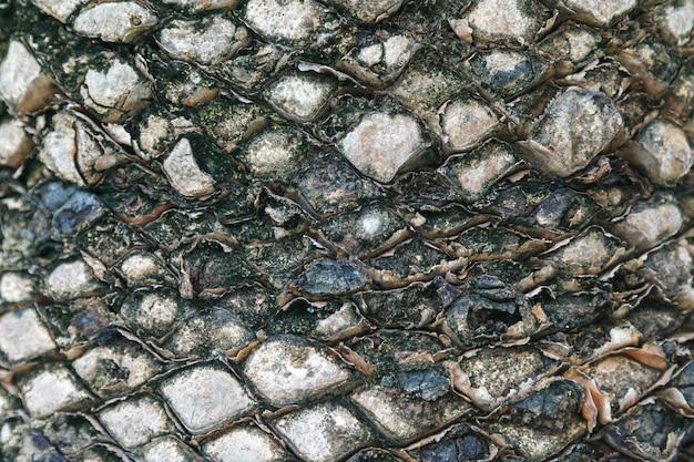 Texture d'écorce de palmier. beau motif d'écorce. fermer.