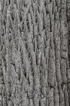Texture d'écorce de poirier, texture de peau d'arbre, texture d'écorce ancienne