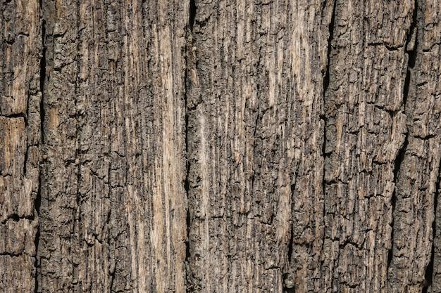 Texture de l'écorce de surface se bouchent comme un fond