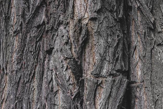 La texture de l'écorce d'un vieil arbre, le fond de la structure en vrac de l'arbre.