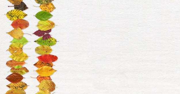Texture de la feuille d'automne sur un blanc