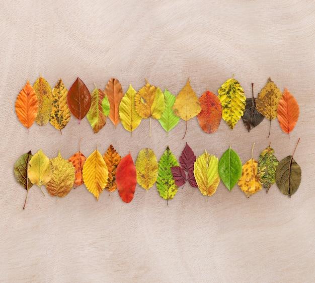 Texture de la feuille d'automne sur bois