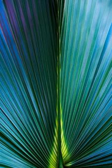 Texture de feuille de palmier et fond se bouchent, vives