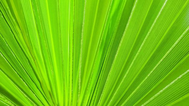 Texture de feuille de palmier pour le fond