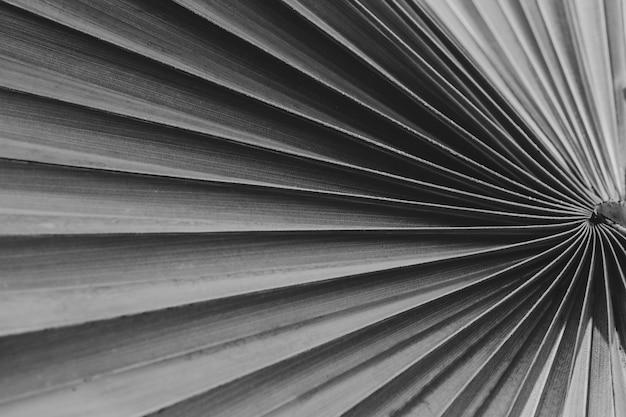 La texture de la feuille de palmier tropical est un fond abstrait, un filtre noir et blanc