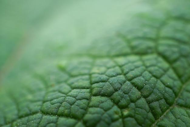 Texture de feuille de plante verte abstraite