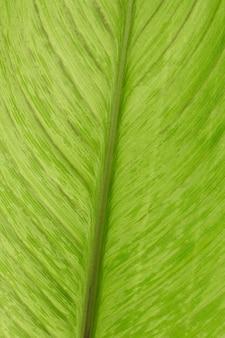Texture de feuille de plante verte