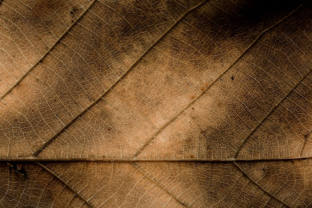 Texture de feuille sèche brune