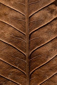 Texture de feuille sèche