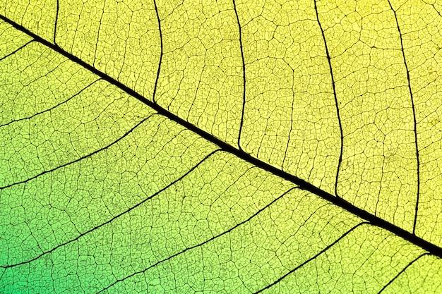 Texture de feuille translucide avec teinte colorée