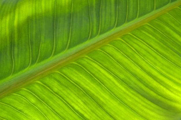 Texture de feuille verte abstraite