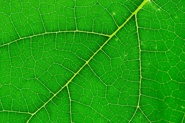 Texture de feuille verte agrandi, macro