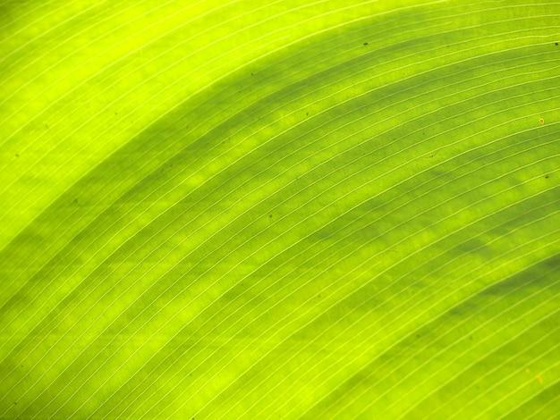 Texture d'une feuille verte en arrière-plan