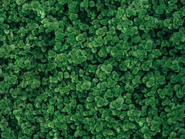 Texture de la feuille verte / fond de la texture de la feuille / espace de copie
