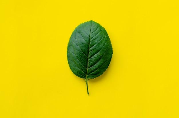Texture de la feuille verte. fond de texture de feuille