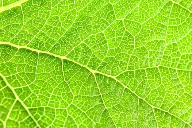 Texture de feuille verte, gros plan