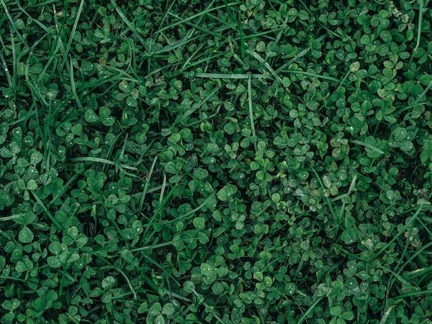 Texture de la feuille verte