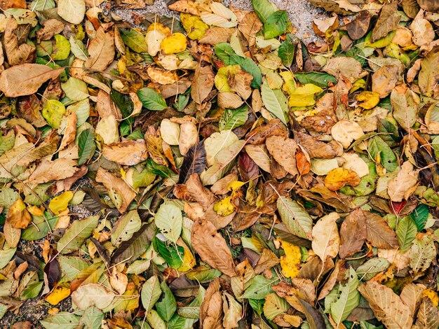 La texture des feuilles d'automne les feuilles tombées jaunes au sol