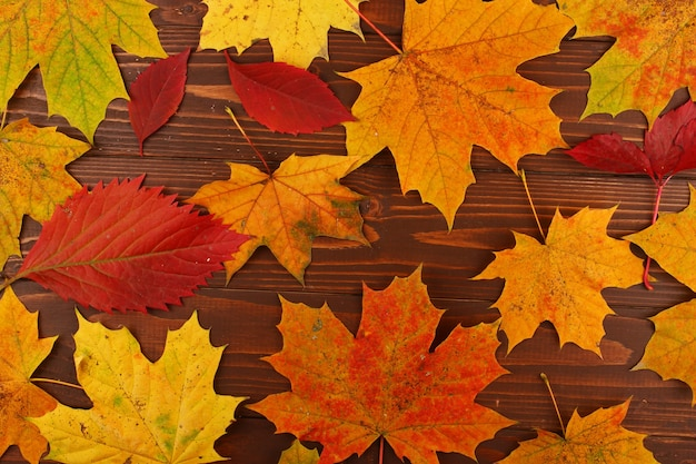 Texture des feuilles d'automne sur tableau noir