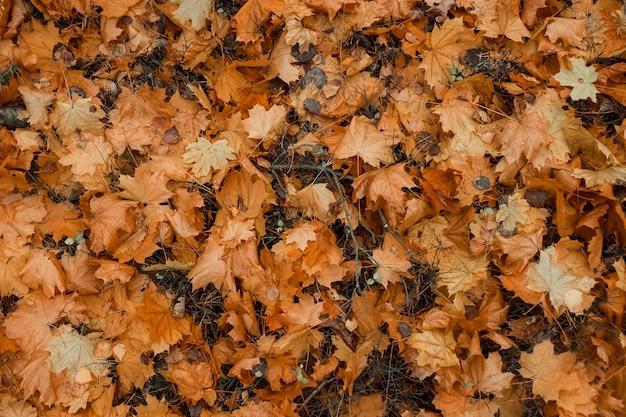 Texture, feuilles jaunes sur le sol, vue de dessus. feuilles froides et jaunes, humeur d'automne. espace de copie.