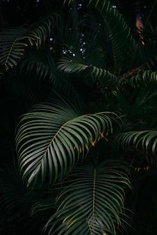 Texture de feuilles de palmier dans le fond de la forêt sombre