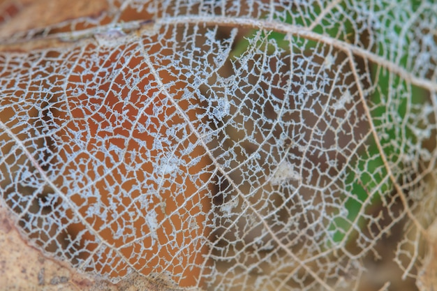 Texture avec des feuilles pourries avec des fibres