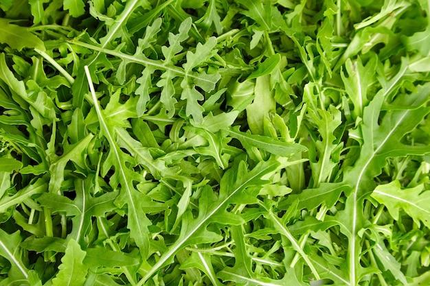 Texture de feuilles de roquette bio verte fraîche ou de salade de ruccola