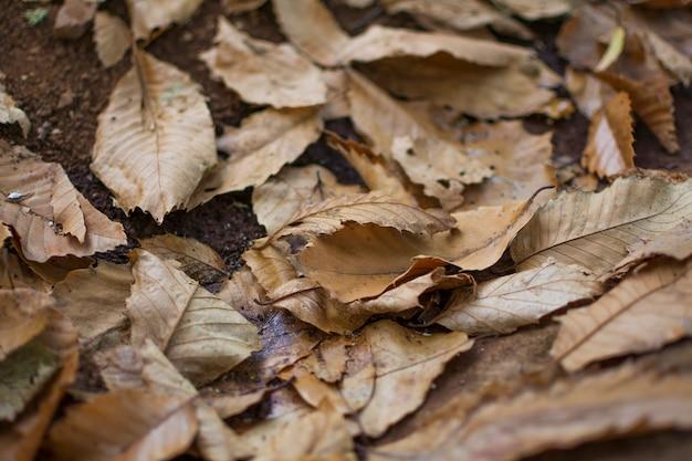 Texture des feuilles sèches à l'automne sur le terrain.