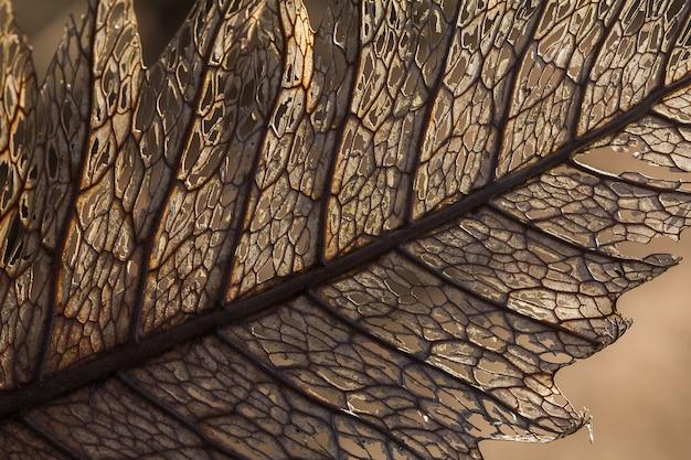 Texture des feuilles sèches dans une belle nature. les feuilles sèches se dégradent naturellement.