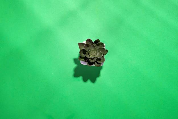 Texture des feuilles vertes isolé sur fond vert avec des ombres profondes, relaxatio de plante verte