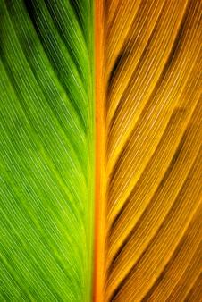 Texture des feuilles