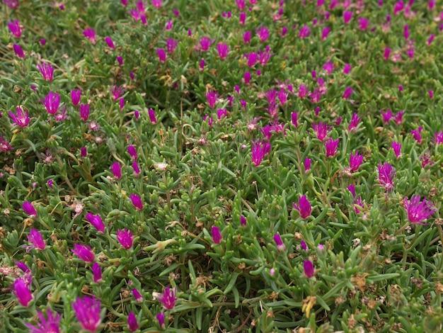 Texture de fleurs violettes