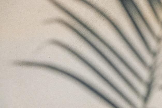 Texture de fond abstrait de feuille d'ombres sur un mur de béton