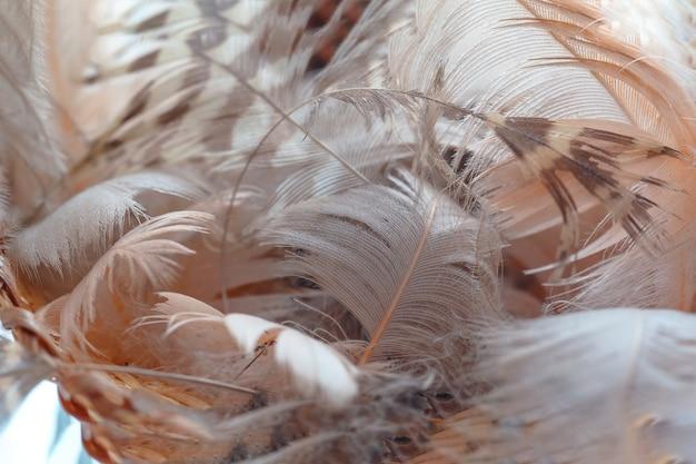 Texture de fond coloré de plumes d'autruche