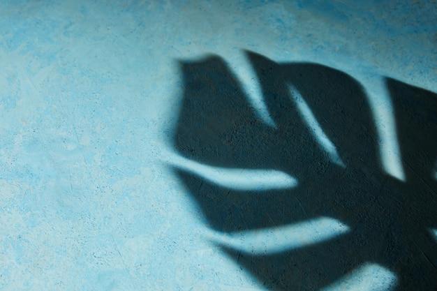 La texture de fond est bleue avec une ombre dure du monstera.