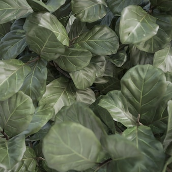 Texture et fond de feuille verte tropicale abstraite., modèle 3d et illustration.