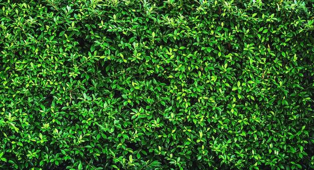 Texture de fond de feuilles vertes fraîches