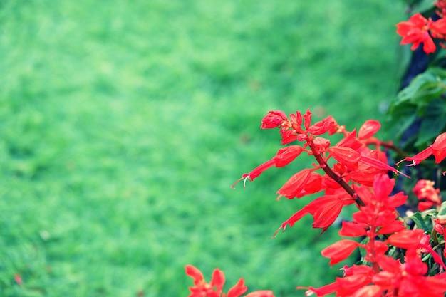 Texture de fond de fleur rouge, fond naturel
