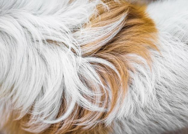 Texture de fond de fourrure animale