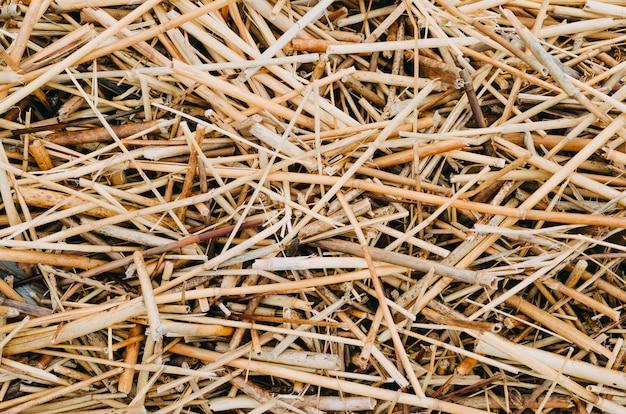 Texture de fond d'herbe de paille jaune sec après la récolte.