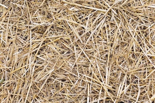 Texture de fond d'herbe de paille jaune sec
