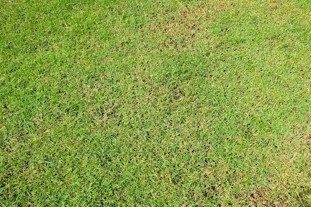 Texture ou fond d'herbe verte fraîche, terrains de golf