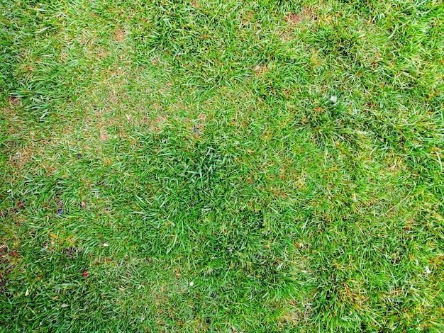 Texture de fond d'herbe