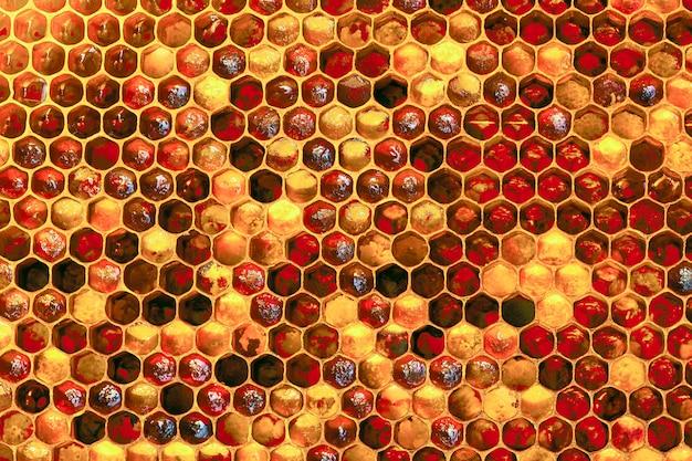 Texture de fond et motif d'une section de nid d'abeille de cire d'une ruche d'abeilles remplie de miel doré