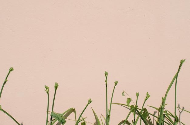 Texture de fond d'un mur rose clair dans un jardin avec une plante au fond. espace de copie