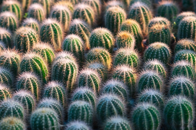 Texture de fond petit cactus