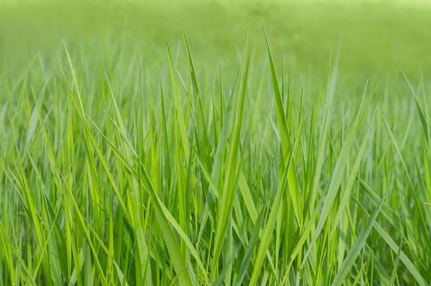 Texture de fond photo herbe verte