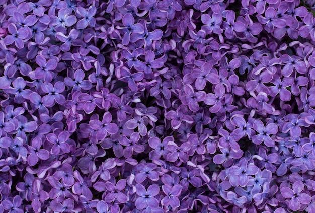 Texture de fond violet lilas