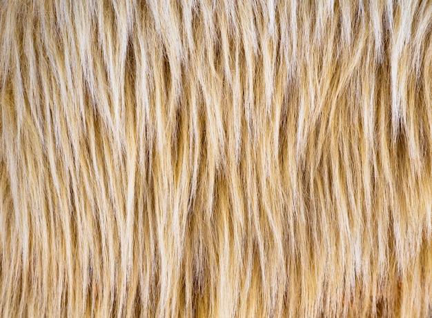 Texture de fourrure beige et marron à poils longs